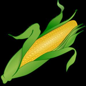 Corn PNG PNG Clip art