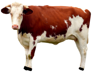 Cow PNG Free Download PNG Clip art