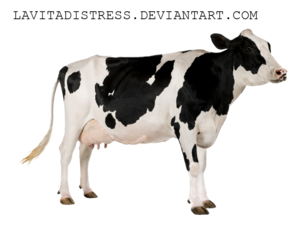 Cow PNG Photos PNG icon