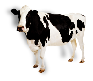 Cow PNG Pic PNG Clip art