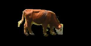 Cow PNG Transparent Image PNG Clip art