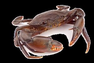Crab PNG Clipart PNG Clip art