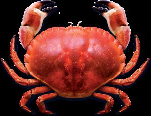 Crab PNG Photo PNG Clip art