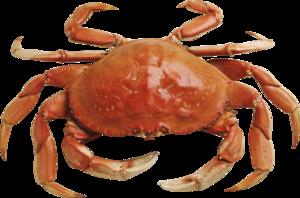 Crab PNG Photos PNG Clip art