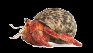 Crab Transparent PNG PNG Clip art