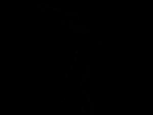 Cricket PNG HD PNG Clip art