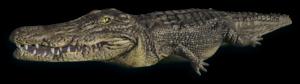 Crocodile PNG Transparent PNG Clip art