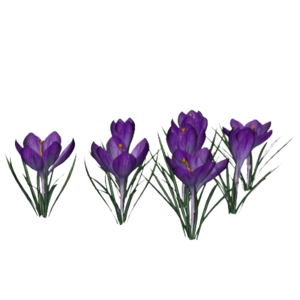 Crocus PNG Photo PNG Clip art