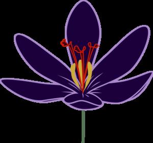 Crocus Transparent PNG PNG Clip art