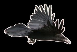Crow PNG Image PNG Clip art