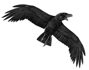 Crow PNG Transparent Image PNG Clip art