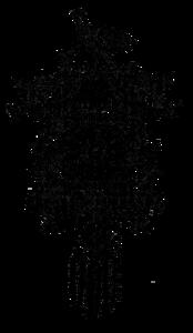 Cuckoo PNG HD PNG Clip art