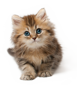 Cute Cat PNG PNG Clip art