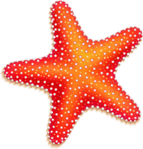 Cute Starfish PNG File PNG Clip art
