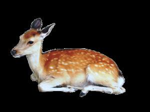 Cute Transparent Deer PNG PNG Clip art