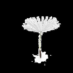 Dandelion PNG Pic PNG Clip art