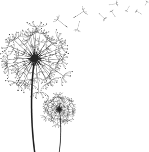 Dandelion PNG Transparent Image PNG Clip art