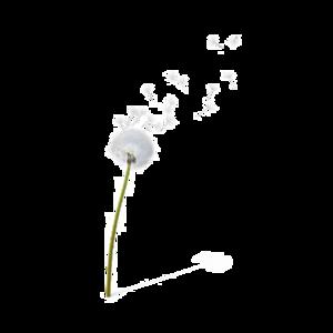 Dandelion Transparent Background PNG clipart