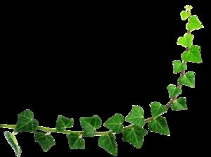 Decorative Leaf PNG Background Image PNG Clip art