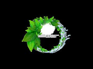 Decorative Leaf PNG Picture PNG Clip art