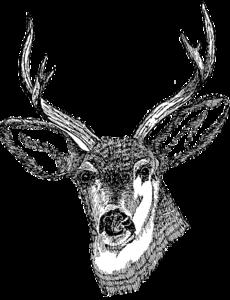 Deer Head PNG Clipart PNG Clip art