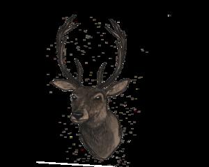 Deer Head PNG File PNG Clip art