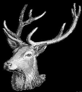 Deer Head PNG Free Download PNG Clip art