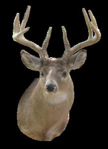Deer Head PNG HD PNG Clip art