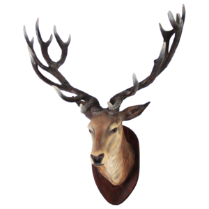 Deer Head PNG Transparent Image PNG Clip art