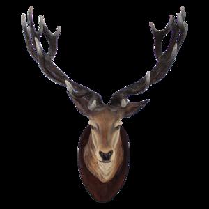 Deer Head Transparent PNG PNG Clip art