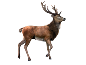 Deer With Transparent Background PNG PNG Clip art