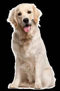 Dog PNG File PNG Clip art