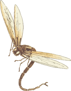 Dragonfly Download PNG Image PNG Clip art