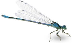 Dragonfly PNG Pic PNG Clip art