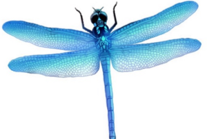 Dragonfly PNG Picture PNG Clip art