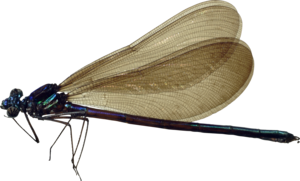 Dragonfly Transparent Images PNG PNG Clip art