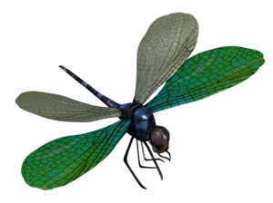 Dragonfly Transparent PNG PNG Clip art