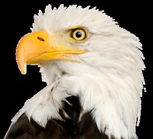 Eagle Head PNG File PNG Clip art