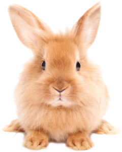 Easter Rabbit PNG HD PNG Clip art