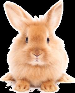 Easter Rabbit PNG HD PNG Clip art