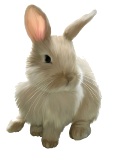 Easter Rabbit PNG Image PNG Clip art