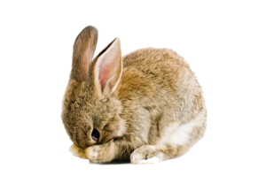 Easter Rabbit PNG Pic PNG Clip art