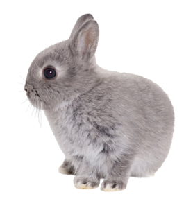 Easter Rabbit Transparent PNG PNG Clip art