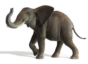 Elephant PNG File PNG Clip art