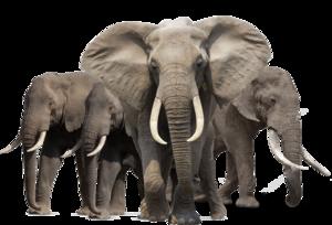 Elephant PNG HD PNG Clip art