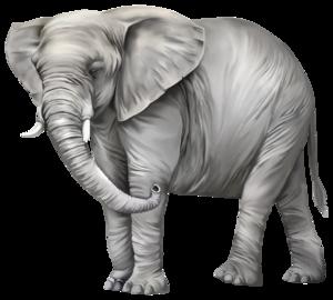 Elephant PNG Photos PNG Clip art