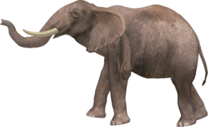Elephant PNG Pic PNG Clip art