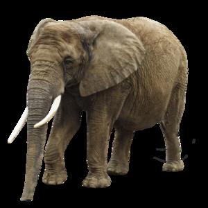 Elephant PNG Transparent Image PNG Clip art