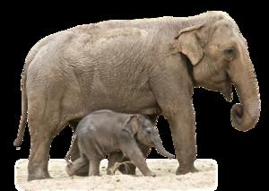 Elephant Transparent PNG PNG Clip art