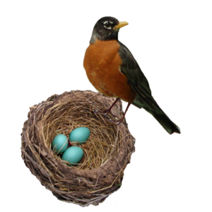 European Robin PNG Background Image PNG Clip art